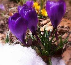 Spring Emergence