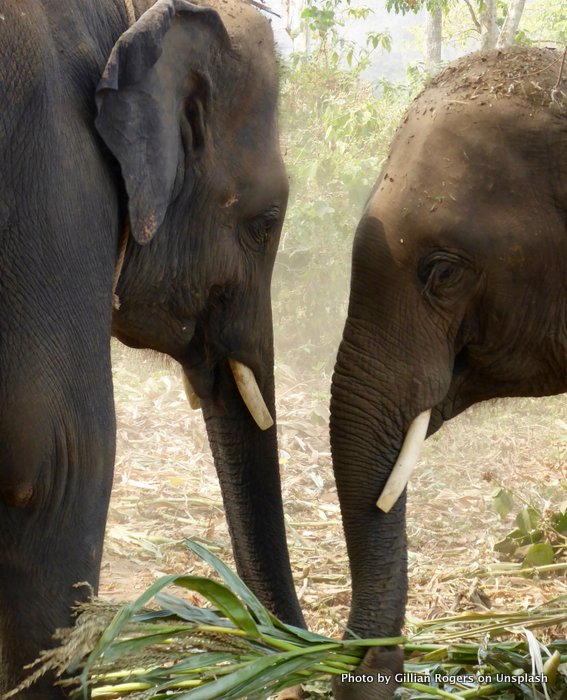 Elephants showing us an informational interview