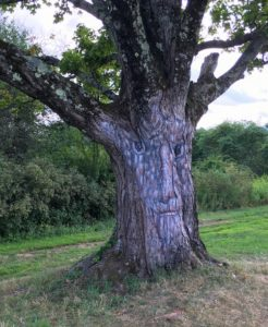 Finding your purpose in retirement - like this wise tree living its purpose in a joyful way