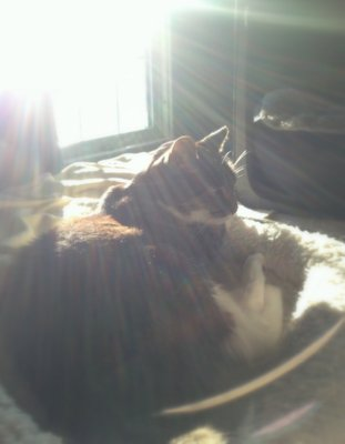 [Image: my cat]