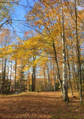 Fall trees 2017