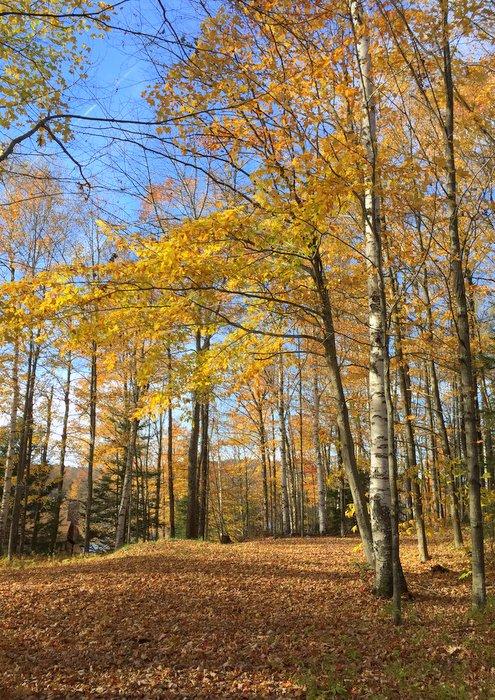 October trees 2017