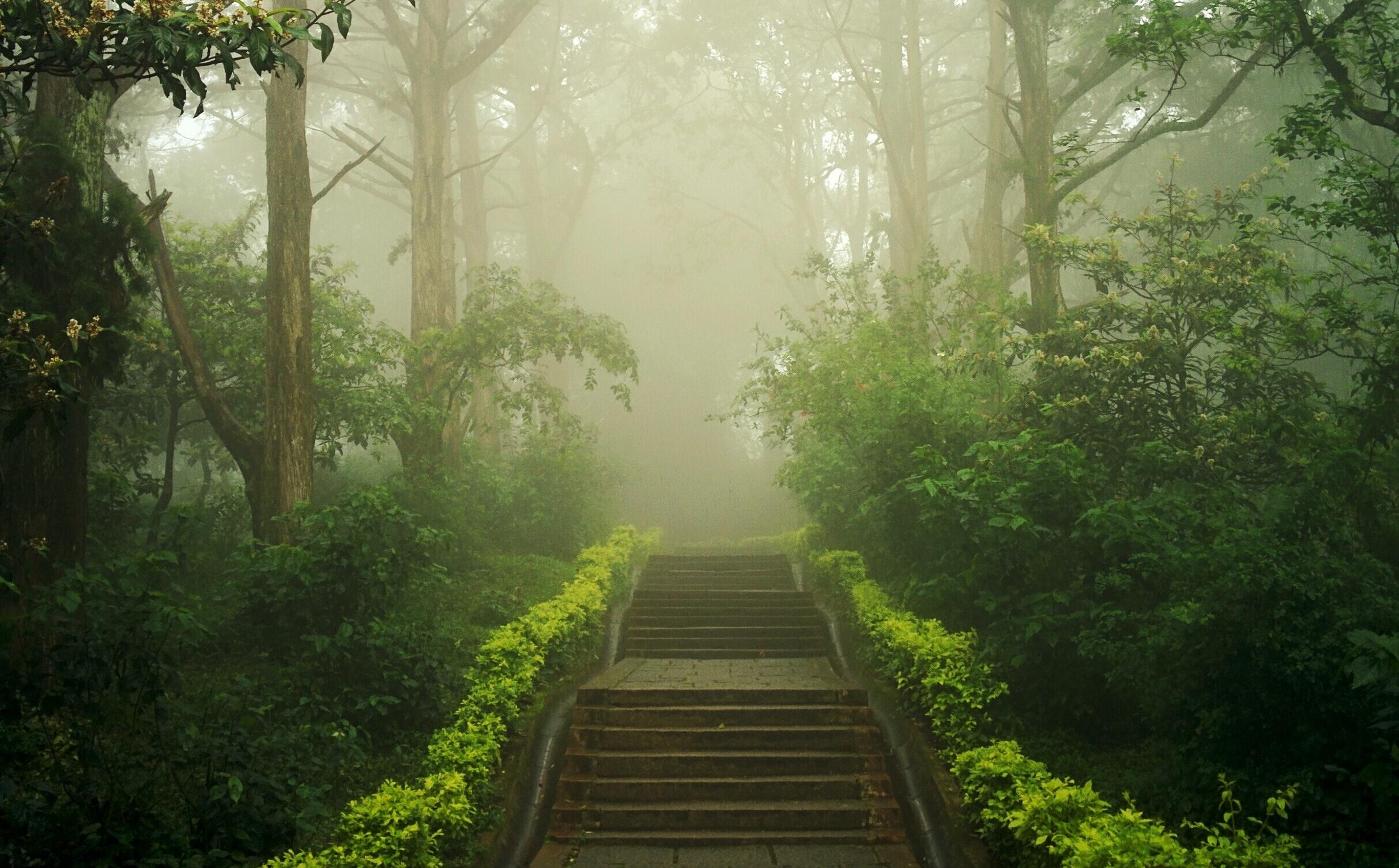 image - simple steps on a foggy path