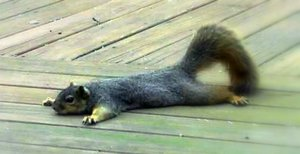 Image: Even squirrels chill out sometimes.