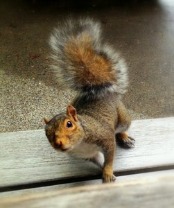 Feeling squirrely this time of year? Racing after nuts before winter?