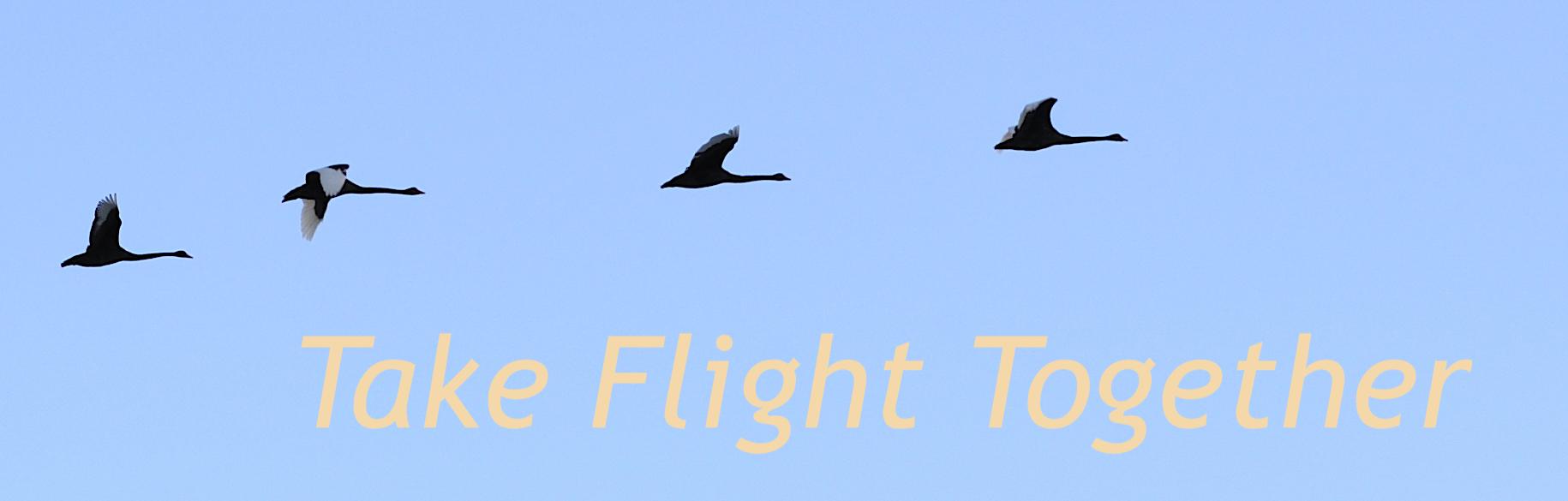 Take Flight Together - swans flying image